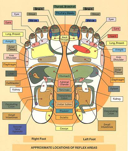 organ foot diagram hands heeling soles reflexology - reflexology human foot diagram